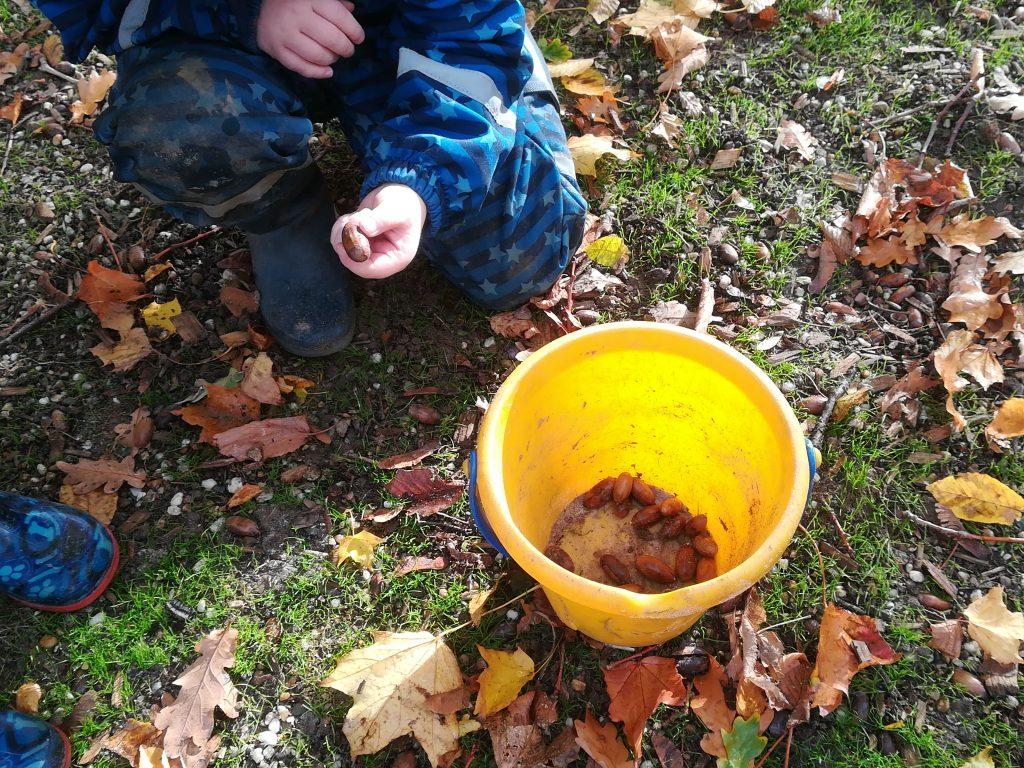 Ein Snack für Wildtiere -  AWO-Kindertagesstätte sammelt Eicheln 2
