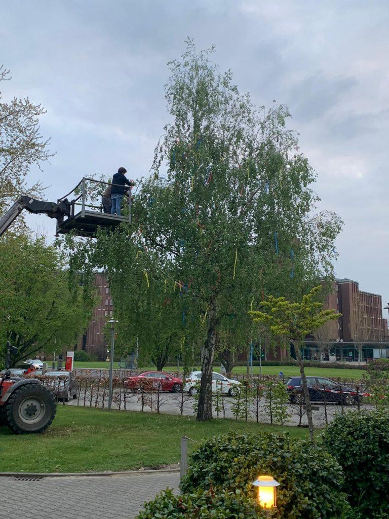 Ein Maibaum für das AWO-Altenzentrum Heinsberg 5