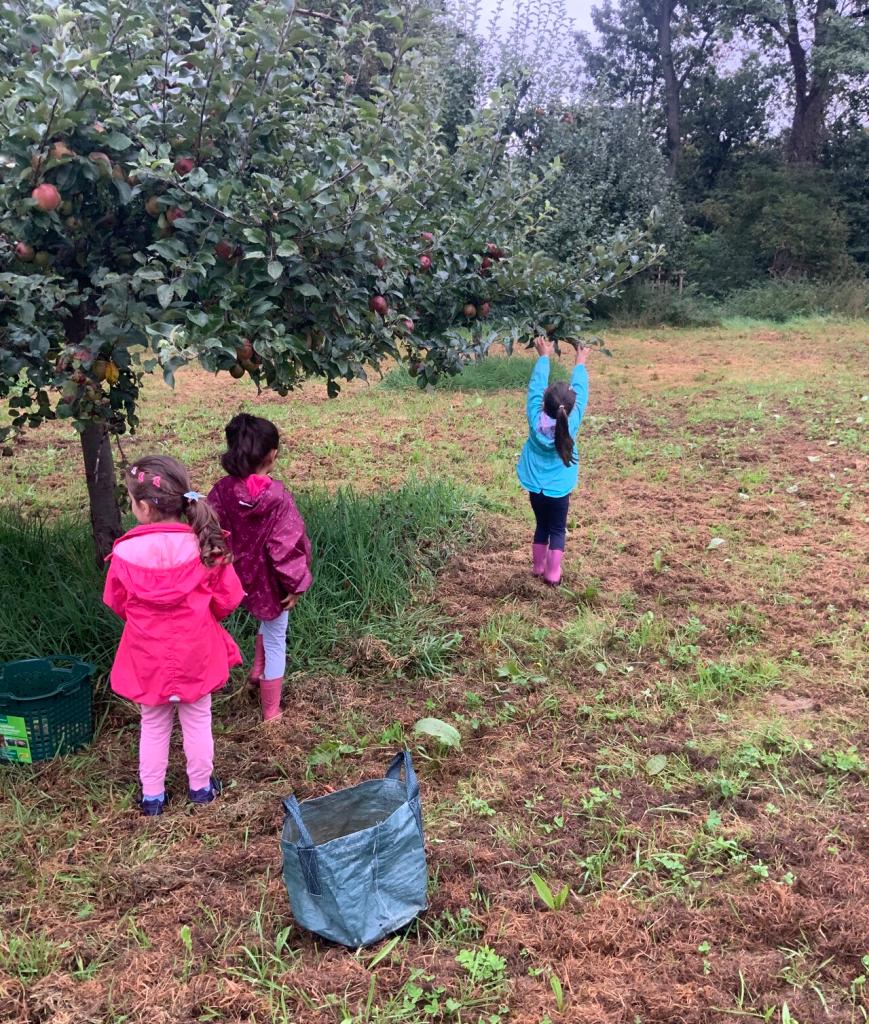 Gemeinsames Apfelprojekt der AWO-Kita Übach mit dem Naturschutzbund 3
