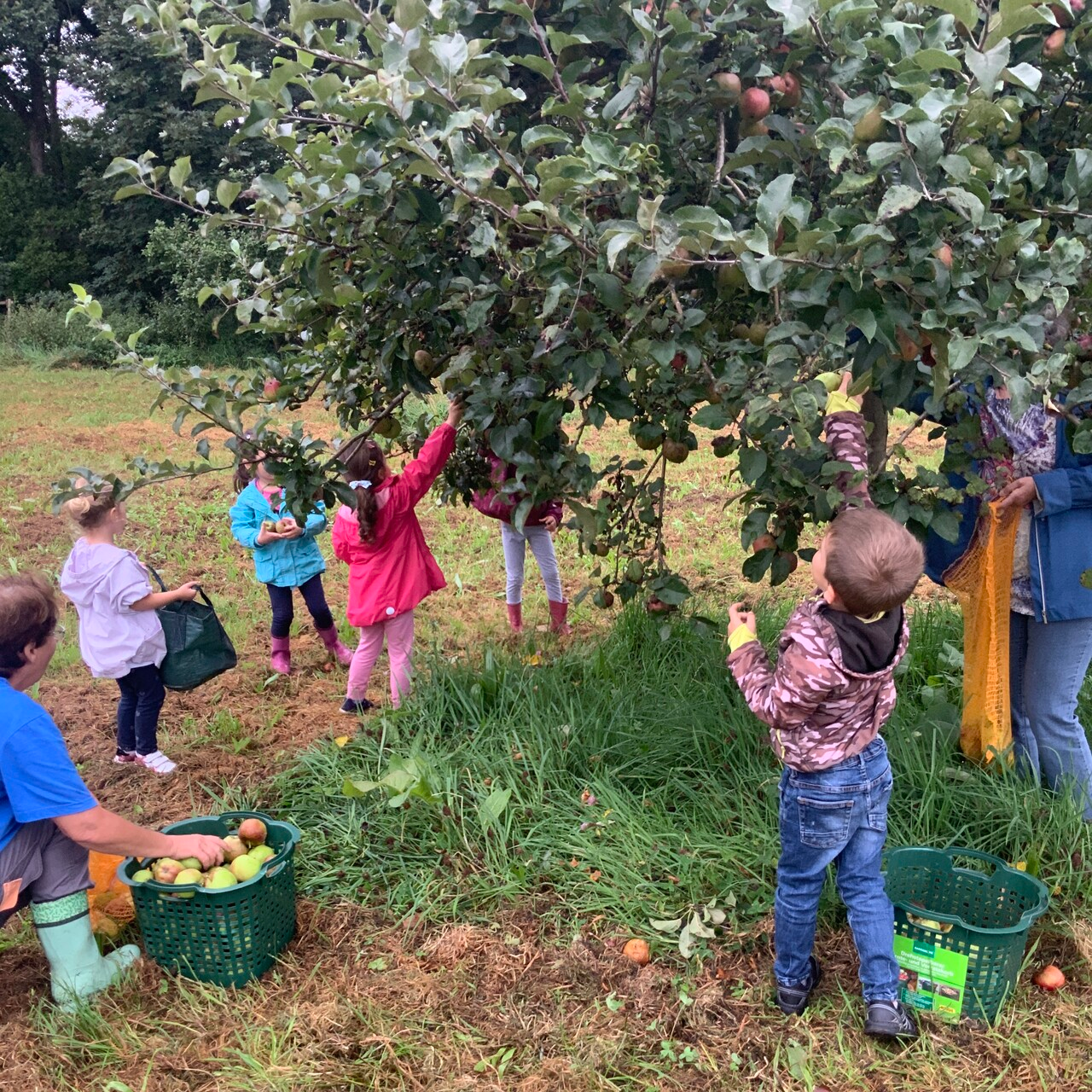 Gemeinsames Apfelprojekt der AWO-Kita Übach mit dem Naturschutzbund 1