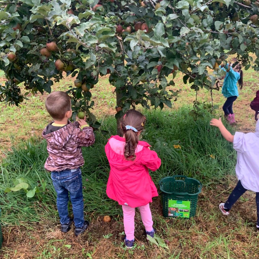 Gemeinsames Apfelprojekt der AWO-Kita Übach mit dem Naturschutzbund 4
